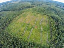 Alte Pläne, wo sie den Wald in dem verlorene Pilzpflücker verringerten Lizenzfreies Stockfoto