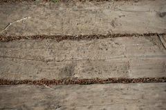 Alte Planken des Holzes Stockfoto