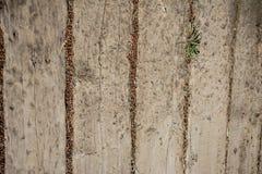 Alte Planken des Holzes als hölzerner Hintergrund Lizenzfreies Stockfoto
