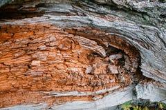 Alte raue hölzerne Beschaffenheit hölzern Hintergrund Baum sprung exotisch nave Lizenzfreies Stockbild