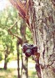 Alte Retro- Filmkamera, die an einem Baum hängt Lizenzfreie Stockfotos