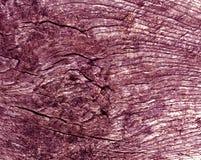 Alte rosa getonte Baumschnittbeschaffenheit Stockbilder