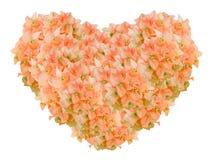 Alte rosafarbene Bouginvillea-Blumen-Herzform lokalisiert auf weißem Hintergrund Stockbilder