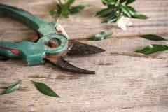 Alte rostige Beschneidungsscheren mit Blättern Stockfotos