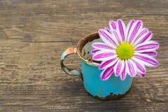 Alte rostige Schale mit Blume Lizenzfreies Stockfoto