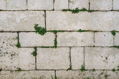 Alte rostige Steinfliesenwandbeschaffenheit mit grünem Efeu verlässt Anlage wie lizenzfreie stockfotografie