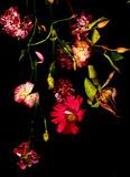 Alte rote Blumen Lizenzfreie Stockbilder