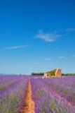 Alte Ruine auf den Lavendelgebieten Stockbilder
