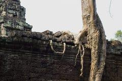 Alte Ruinen von Tempel Preah Khan mit dem Steinschnitzen, Siem Reap, Kambodscha Lizenzfreie Stockbilder