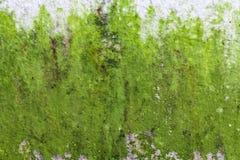 Alte ruinierte und befleckte grungy Wandbeschaffenheit Lizenzfreie Stockfotografie