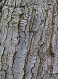 Alte rustikale Baumbarke Stockbild