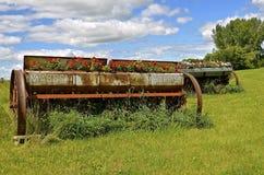 Alte Saatkiste eines Kornbohrgeräts voll des Blühens blüht Lizenzfreies Stockfoto
