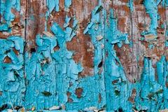 Alte schäbige blaue Farbe auf dem Baum Stockfoto