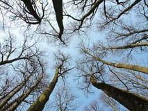 Alte schöne Bäume im Park Stockbild