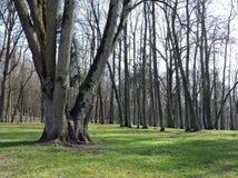Alte schöne Bäume im Park Stockfotos