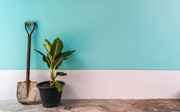 Alte Schaufel mit Pflänzchen auf Minze, cyan-blaue Pastellzementwand Stockfotografie