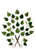 Alte Scheren und grünes Birkenblattmuster Stockfoto