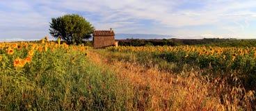 Alte Scheune auf den Sonnenblumen-und Lavendel-Gebieten auf der Hochebene De Valensole Lizenzfreie Stockfotos