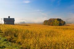 Alte Scheune und ein Feld von Mais auf einem Herbstmorgen in Vermont, US Stockfotografie
