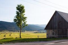 Alte Scheune vom Stein- und grünen Baum in der Nähe die Straße und das Feld in den Bergen in Kroatien Lizenzfreies Stockbild