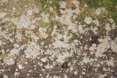 Alte schimmelige und vernachlässigte Wand 2 lizenzfreie stockfotografie