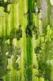 Alte schimmelige Wand Stockbild