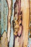 Alte schimmelnde Eichenholzbeschaffenheit Lizenzfreie Stockbilder
