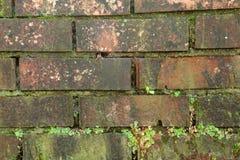 Alte schmutzige Backsteinmauer und voll von plantsOld schmutziger Backsteinmauer Stockfoto