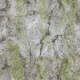Alte schmutzige Betonmauer - nahtlose Beschaffenheit Lizenzfreie Stockbilder