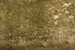 Alte schmutzige Schmutzzement-Betonmauerbeschaffenheit mit Form Lizenzfreie Stockbilder