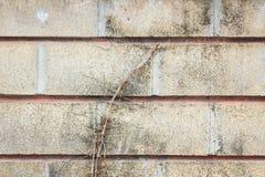 Alte Schmutzwand mit Baumwurzel Lizenzfreie Stockfotografie