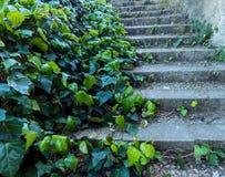 Alte Schritte überwältigt mit Efeuanlage stockbild