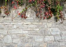 Alte, schroffe Backsteinmauerbeschaffenheit mit dem hellen Fallgrün perfekt für Hintergrund Stockbild