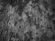 Alte schwarze Barke Stockfoto