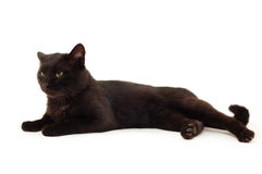 Alte schwarze Katze Lizenzfreie Stockbilder