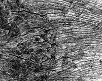 Alte Schwarzweiss-Baumschnittbeschaffenheit Stockbilder