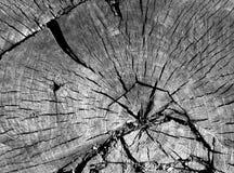 Alte Schwarzweiss-Baumschnittoberfläche Lizenzfreie Stockfotos