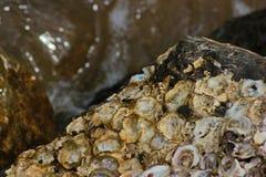 Alte Shells Stockbild