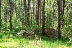 Alte slawische Hügel im Wald stockbild