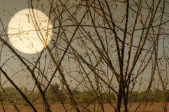 Alte Spinnennetze mit toten Bäumen Lizenzfreie Stockfotografie