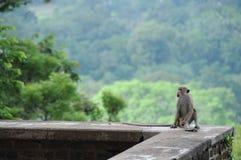 Alte Stadt von Sigiriya in Sri Lanka Lizenzfreie Stockfotografie