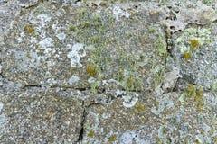 Alte Steinbacksteinmauerbeschaffenheit mit Flechte und Moos Detail Stockfotografie