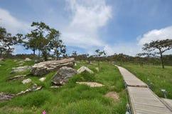 Alte Steine und lange Brücke in der grünen Rasenfläche Stockfoto