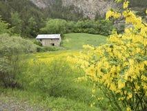 Alte Steinscheune auf französischer Landschaft von Provence und von bunten gelben Blumen in der Wiese Stockbild