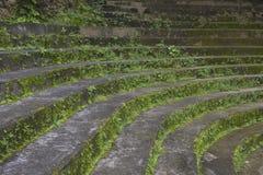 Alte Steinschritte Stockfotografie