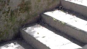 Alte Steinschritte sonnig stock video footage