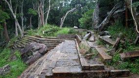 Alte Steinschritte und Bäume Lizenzfreies Stockfoto