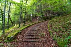 Alte Steintreppe im nebelhaften Wald Stockfoto