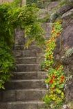 Alte Steintreppen im Garten Stockfoto