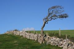 Alte Steinwand, Baum und Ackerland. Stockfoto
